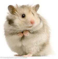 Hamster asustado - Hamster ruso