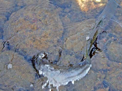 [big-T-fish3-7-08-(6).jpg]