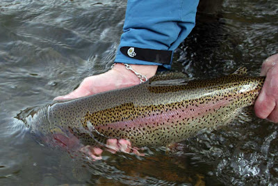 Fly currents fishing report and news south platte river trout for South platte fishing report