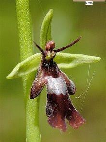 Uma flor ou uma vespa?