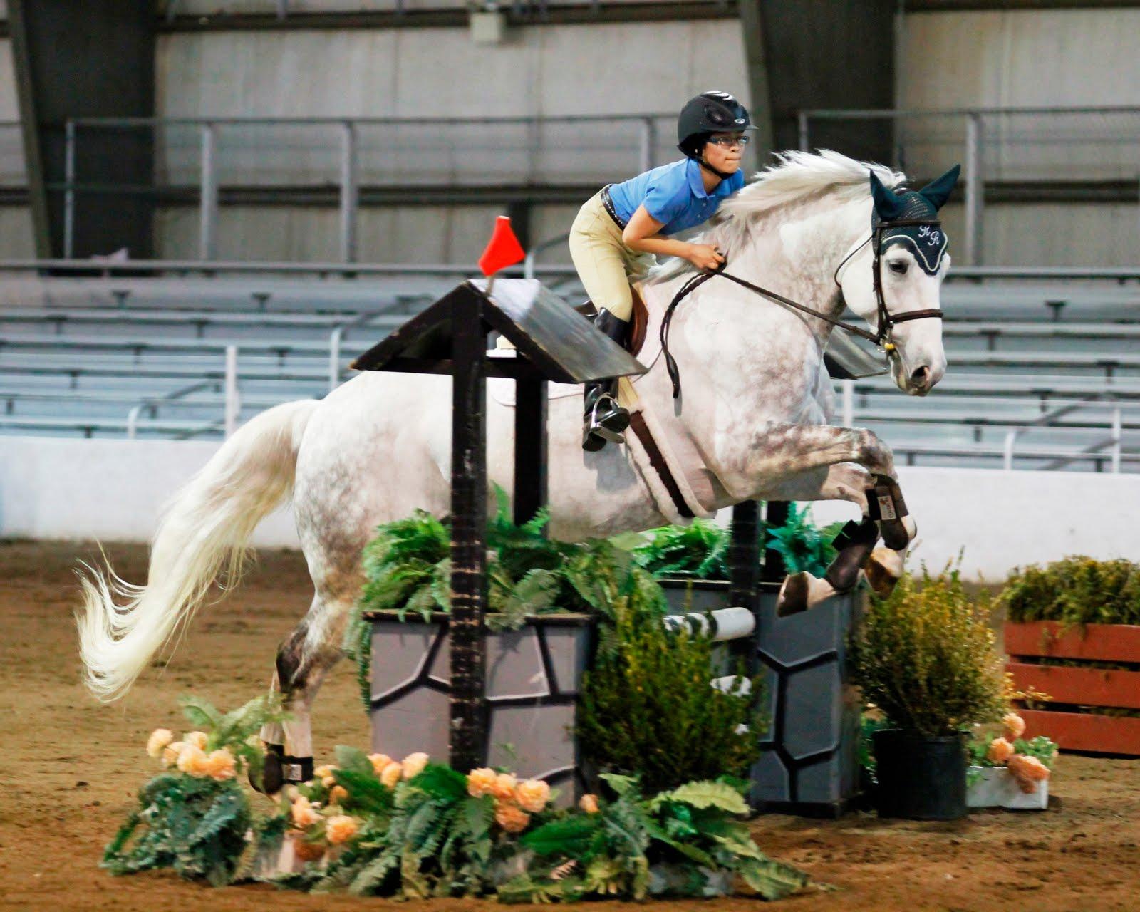 Irish sport horse dun irish draught sport horse