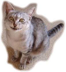 Meowhaha!