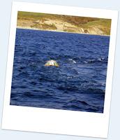 boya oceanográfica