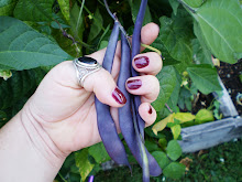 Heirloom Purple Podded Pole Beans