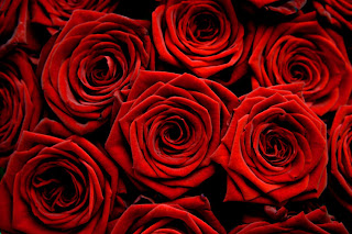 beautiful red roses for my valentine