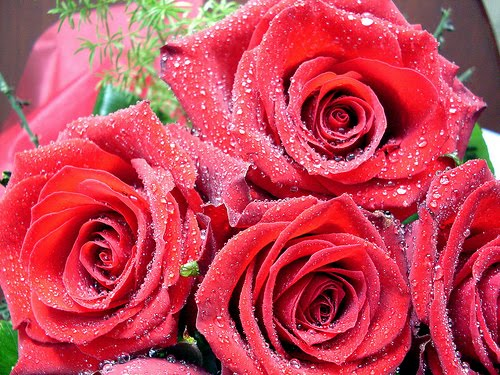 valentine wallpapers bunch of valentine roses wallpaper