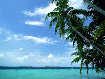 Palms, clean sky, turquoise water and fresh breeze
