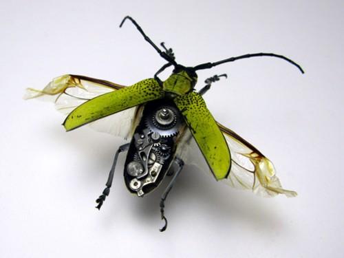 insectrobo1.jpg (500×375)
