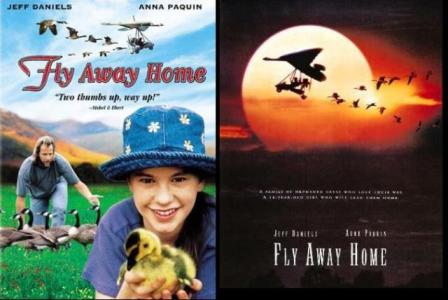 Fly away home pictures.