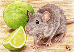 """Lime Rat"" ACEO - SOLD"