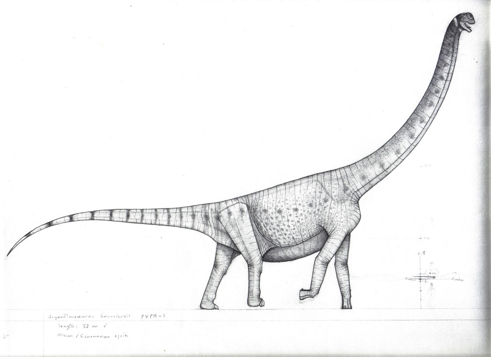 forgotten giants   2  argentinosaurus