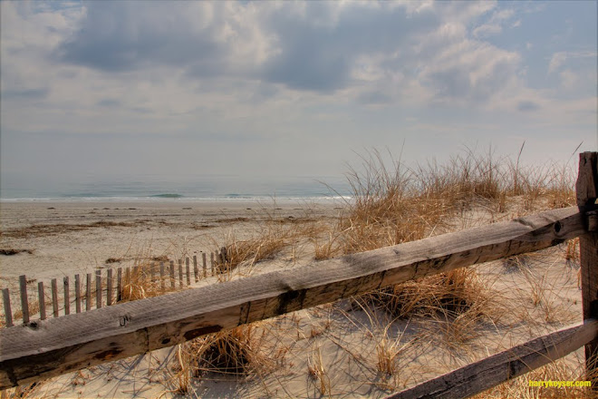 beach and split rail