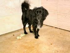 Blacky, adoptado, se fue de la protectora a su nueva casa!