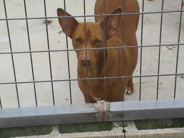 Fiore adoptada en el extranjero en 30 de junio!