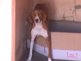 Rocío, 2 añitos, ya tiene adoptante.