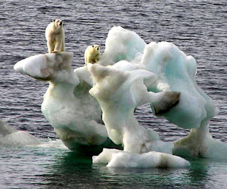 So-called stranded polar bears on a chunk of melting ice