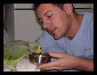 Papagaio Amazonas Amazonico
