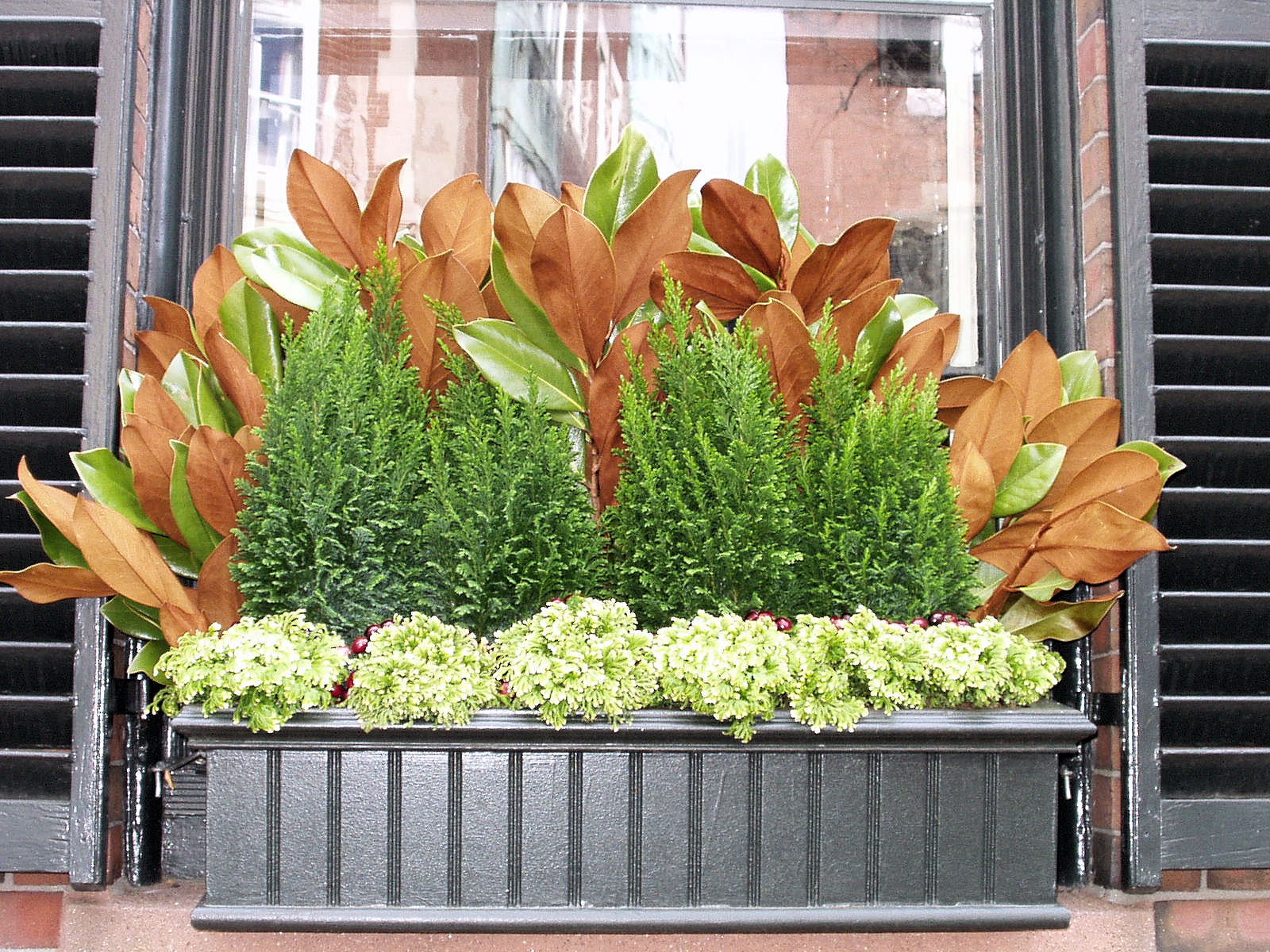 Christmas window box filler - Boxwood Terrace