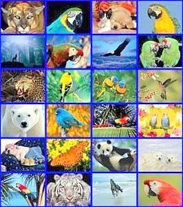Hayvanların özellikleri