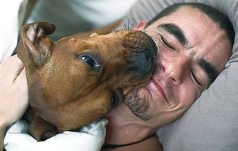 SVEGLIAAAAAAAA!!!!!!!!! GIU DALLE BRANDEEE!!! MALEDETTI! Dog+waking+up+owner