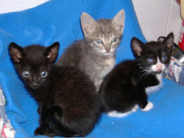 Adoptados