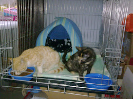 Adoptadas