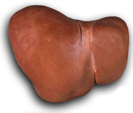 Real Healthy Human Liver