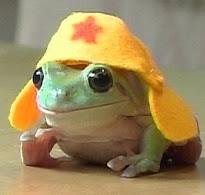 為什麼是打字蛙?