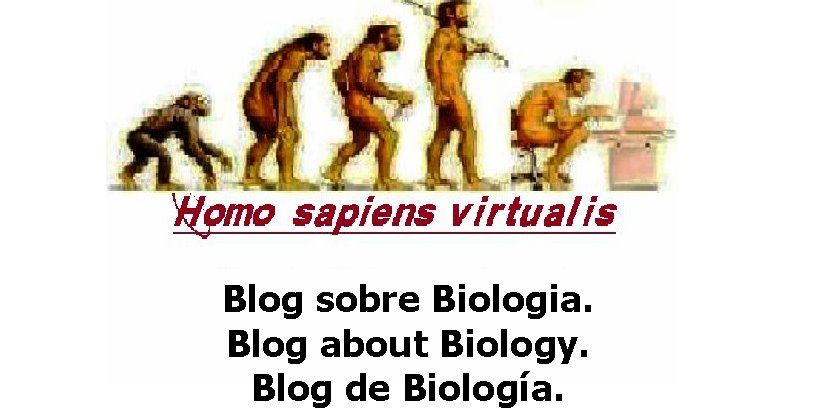 Homo sapiens virtualis