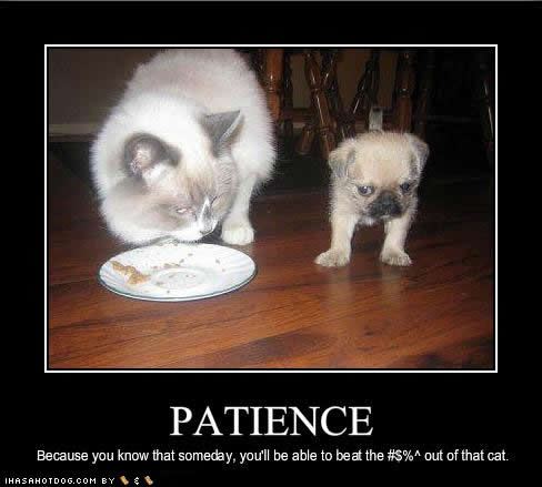 """understanding the virtue of patience Patience is a virtue,  is patience a virtue  the related terms are """"love"""" and """"understanding"""" and """"family"""" and """"peace."""