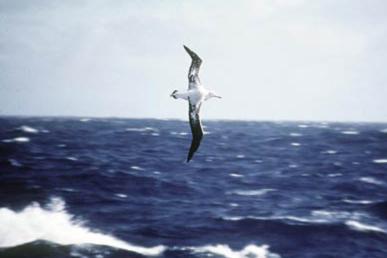 [albatross.jpg]