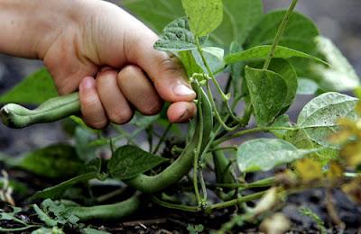 Organic Farming. Farming Organic.