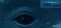 Clique para ver a Baleia Azul