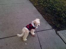 My pup pup Bjork