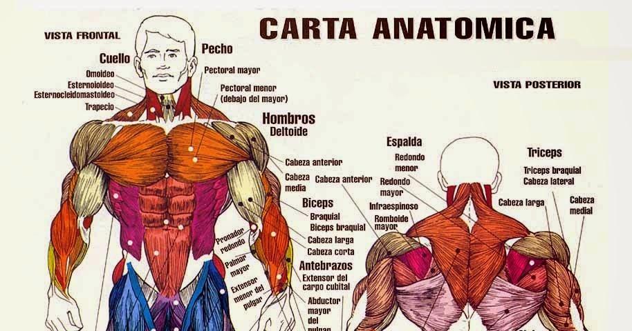 Bonito Anatomía De Una Carta Adorno - Anatomía de Las Imágenesdel ...