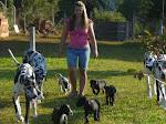 pastoreando dogues