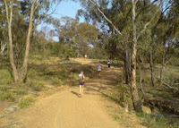 I often walk on this hill to smell the eucalyptus leaves