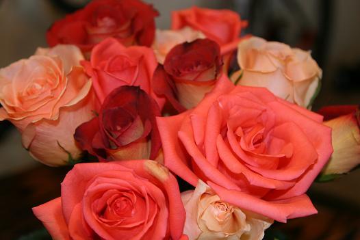 [roses.JPG]
