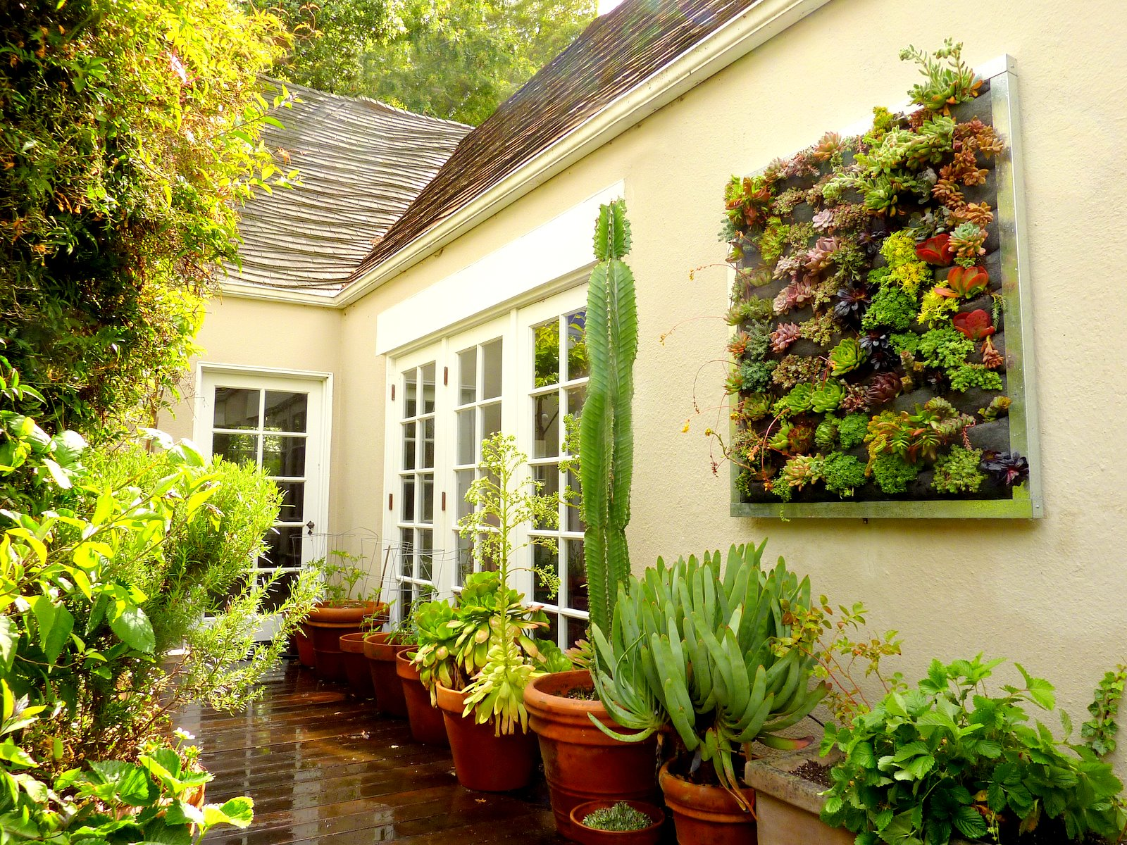 Plants on walls vertical garden systems succulent for Vertical garden wall systems