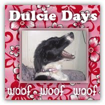 My Dulcie Doggy Blog