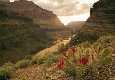 amaging world canyons across the world