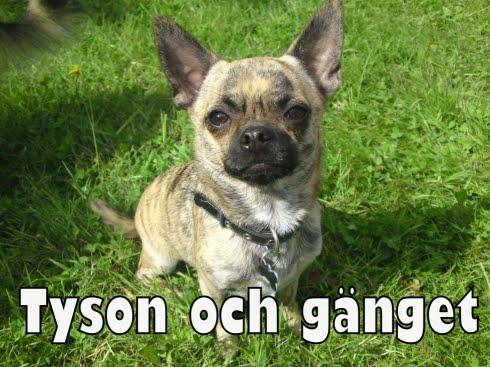 Tyson och gänget