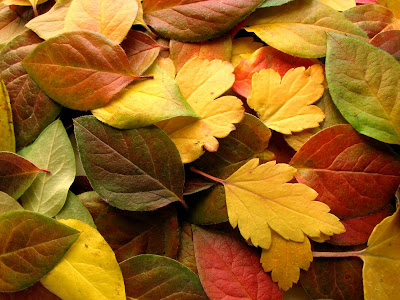 http://4.bp.blogspot.com/_uMT8bVvyauM/SNgVh1iiAkI/AAAAAAAAAVk/MHEXRA2u4ro/s400/outono.jpg