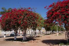 BUGANVÍLIAS - NAMIBE