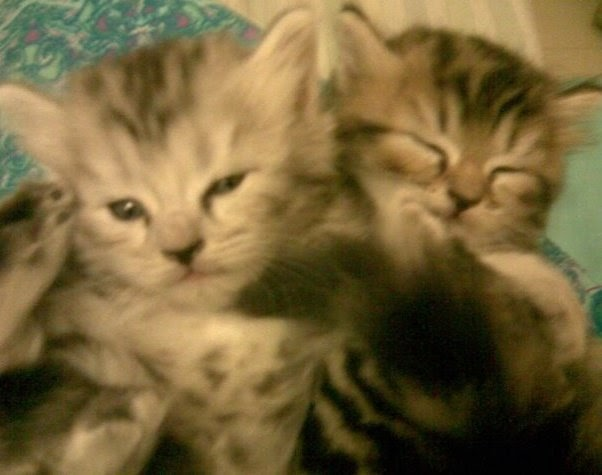 littermaid multi cat