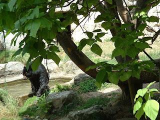 la baignade de l'ours prend fin
