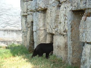 Après un peu d'exercice l'ours retourne dans sa tanière