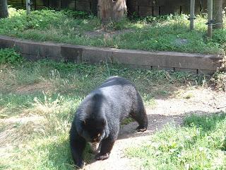 Promenade de l'ours