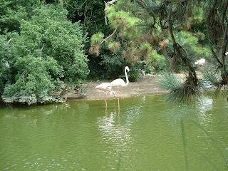 Deux flamants dans leur bassin