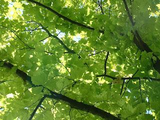 Feuillage diffusant une lumière vert sombre
